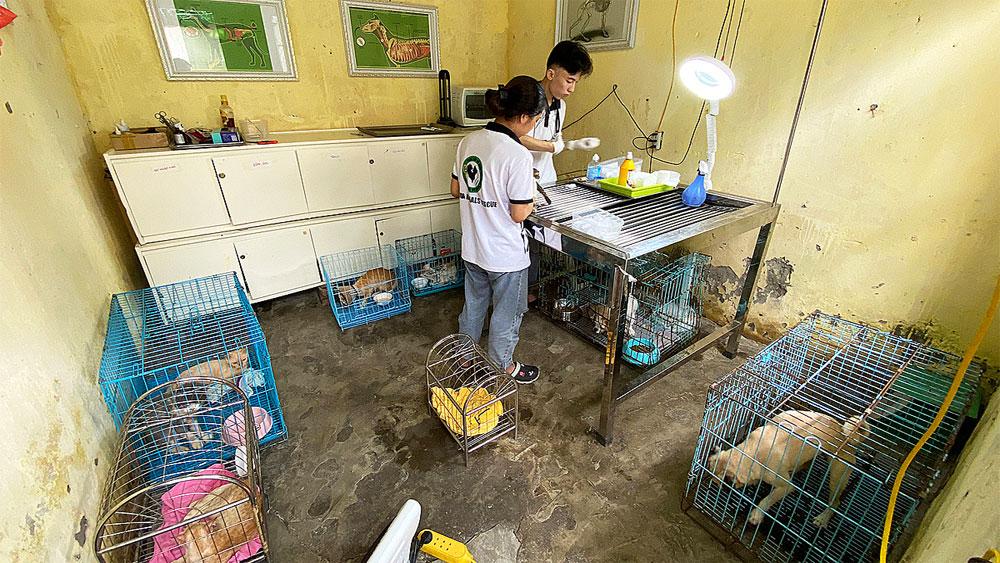 Hanoi students, rescue center, injured animals, Hanoi veterinary students, abandoned animals, veterinary clinic,