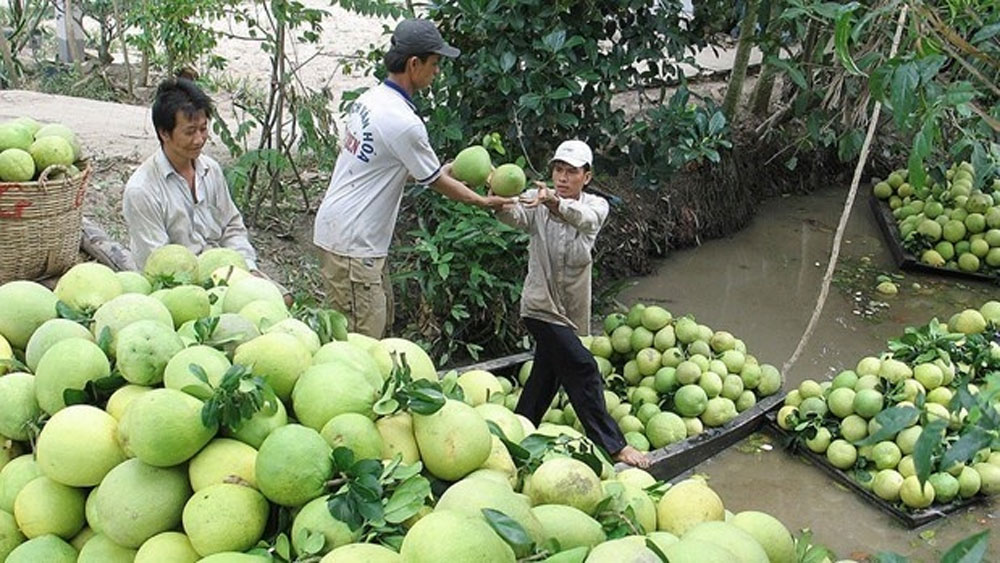 Chile, opens door, Vietnam's pomelo, Latin American market,  bilateral relations, dynamic economic development, farm produce