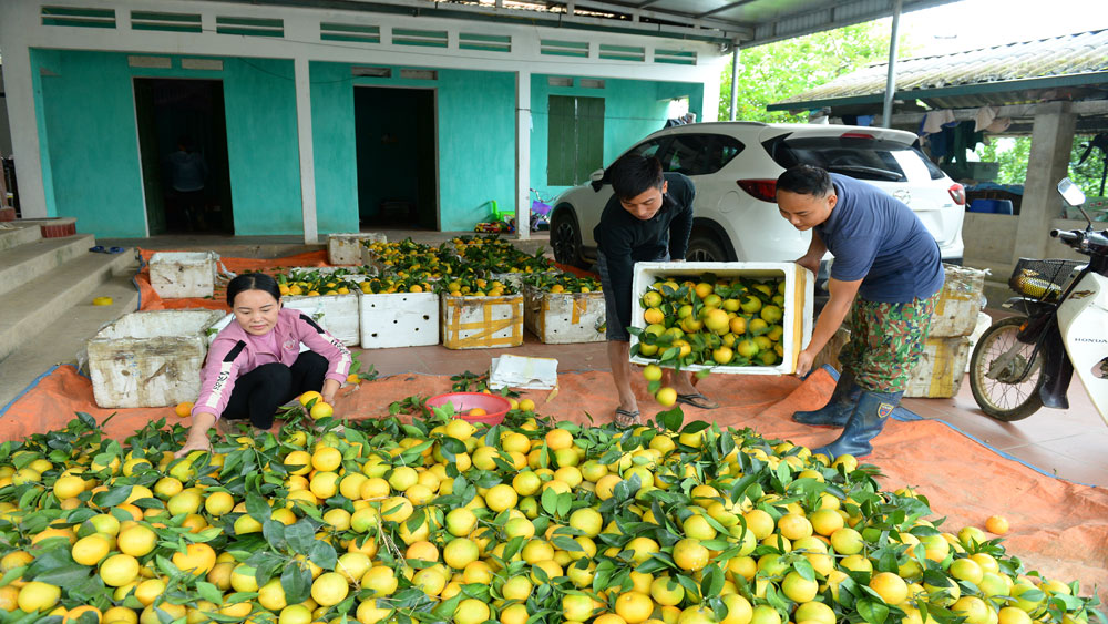 Luc Ngan sustainably develops citrus trees