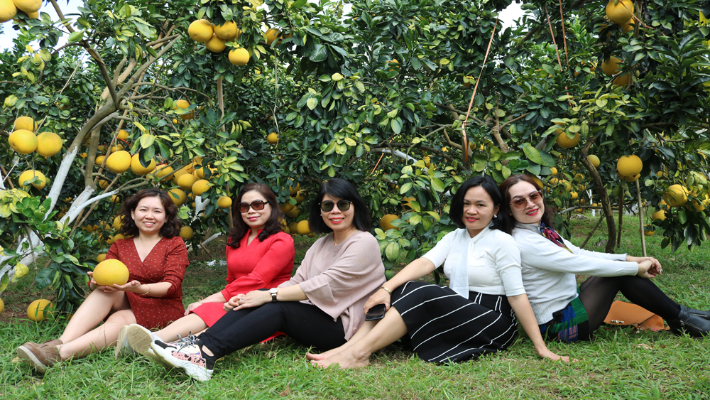 Many visitors register to experience Luc Ngan orchard tour