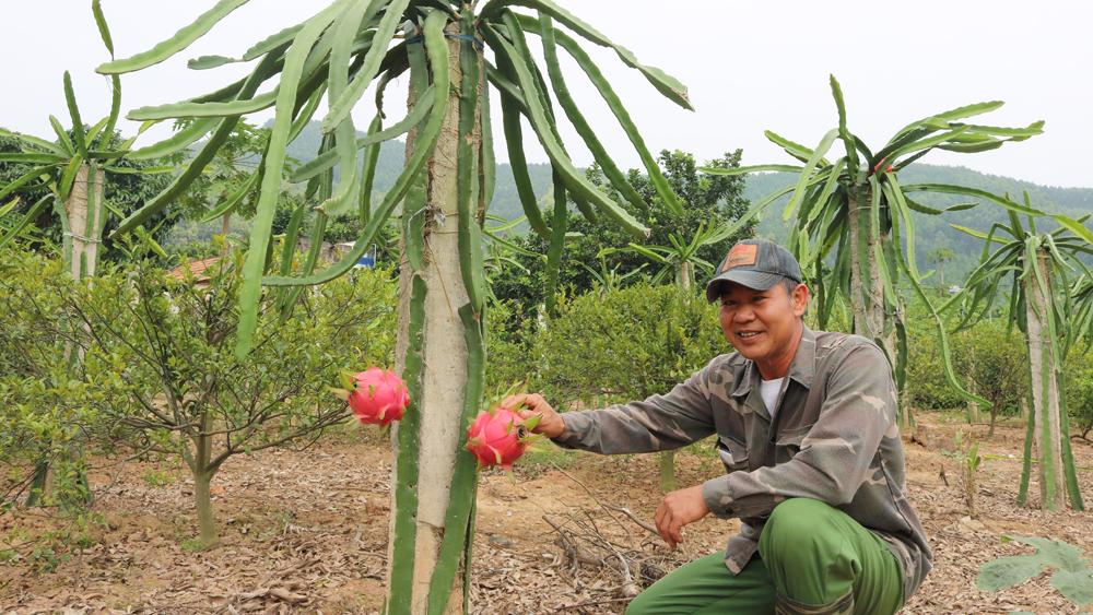 Anh Nguyễn Văn Huế là một trong những người đầu tiên đưa giống cây này về ươm trồng tại thôn Bãi Cả. Hiện gia đình anh có khoảng 600 trụ thanh long, trung bình mỗi năm cho thu lãi hơn 100 triệu đồng.