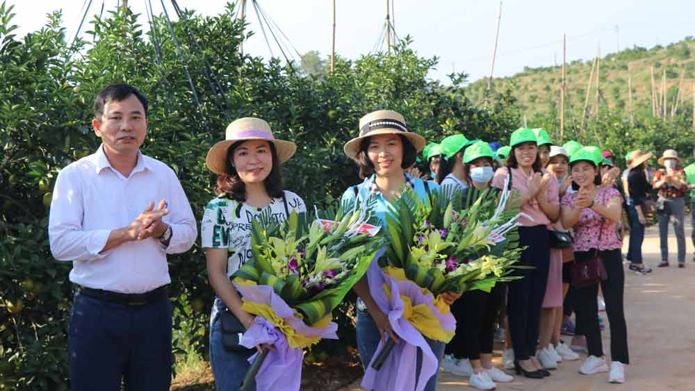 Luc Ngan welcomes first tourist delegation to enjoy orange and pomelo season in 2020