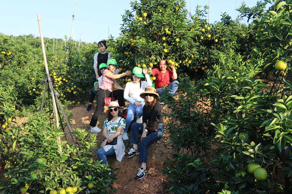 Luc Ngan district, Bac Giang province, welcomes first tourist delegation, orange and pomelo season, traditional craft village, travel contract