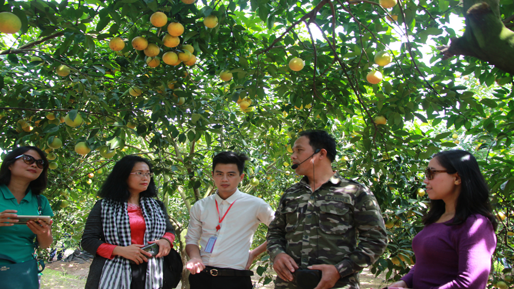 Bac Giang province, suitable tours, Luc Ngan district, orchard tour, Community based Tourism, travel agencies, orange and pomelo orchards