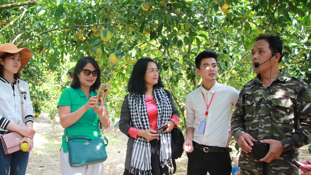 Orange and pomelo season in Luc Ngan district attracts many visitors