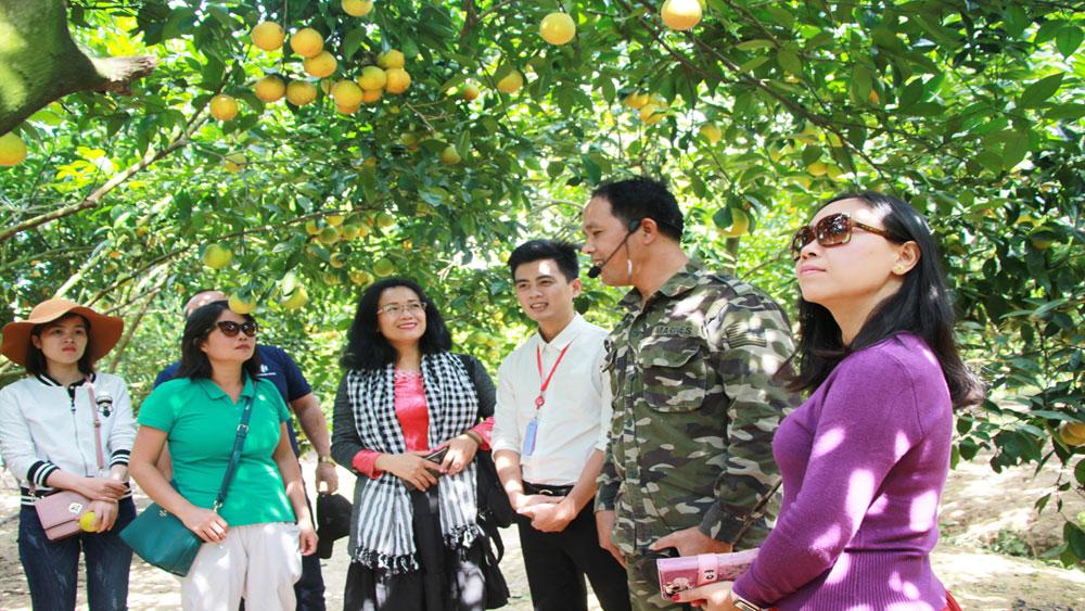 du lịch, cam bưởi, hội chợ, Lục Ngạn, cây ăn quả