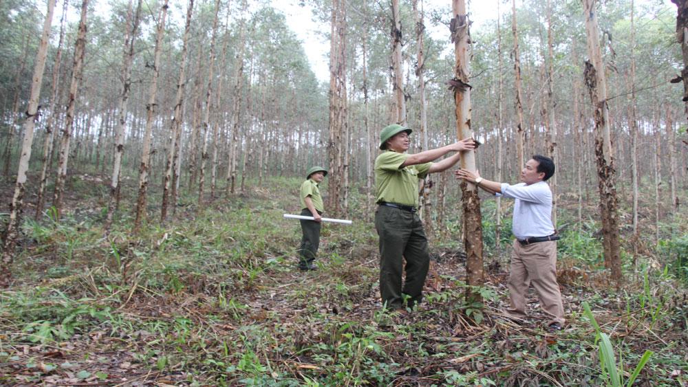 Phát triển kinh tế lâm nghiệp ở Lục Ngạn: Gắn quy hoạch trồng rừng với chế biến