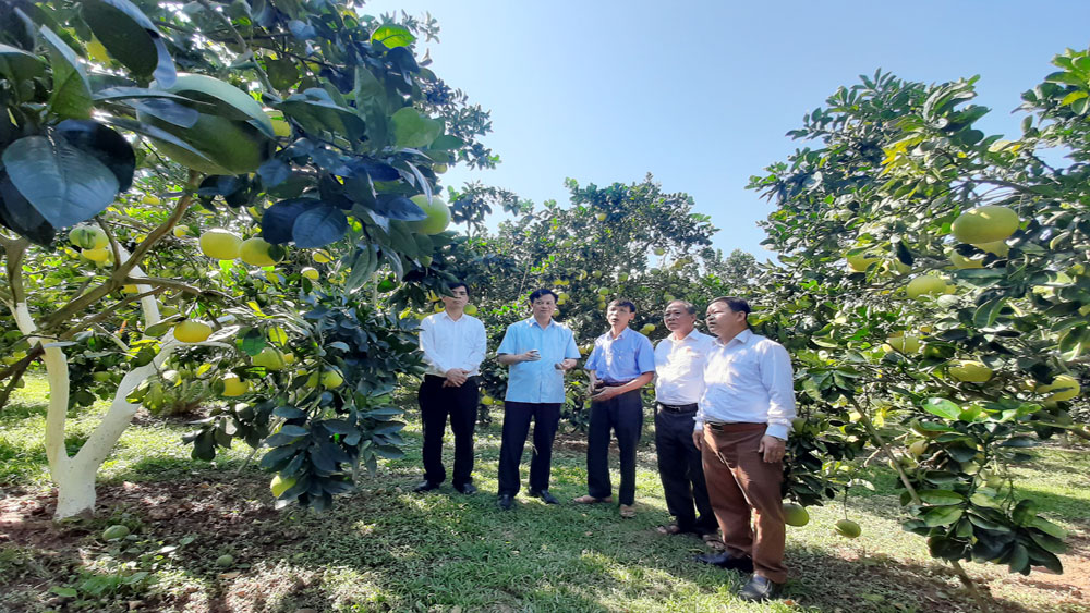 Fair of orange, grapefruit and typical products of Luc Ngan district in 2020: Expanding trade, developing tourism