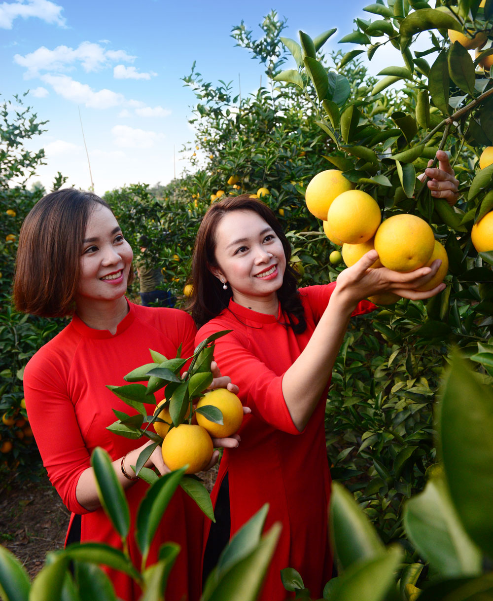Fair of orange, grapefruit, typical products, Luc Ngan district, expanding trade, developing tourism, Bac Giang province