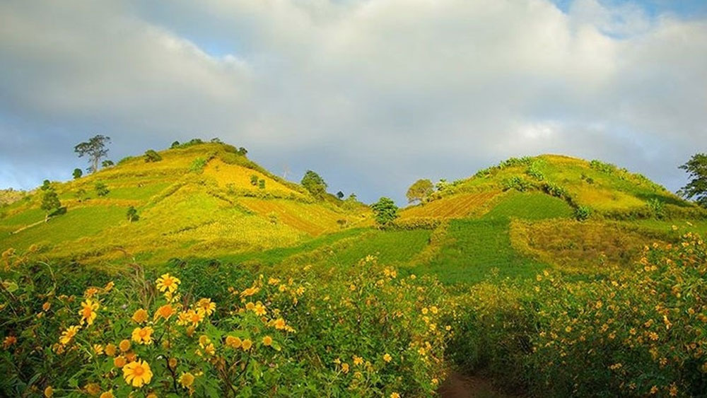 Wildflowers, Chu Dang Ya Volcano Week, opens in Gia Lai, artistic activities, unique cultural colours, cultural heritage