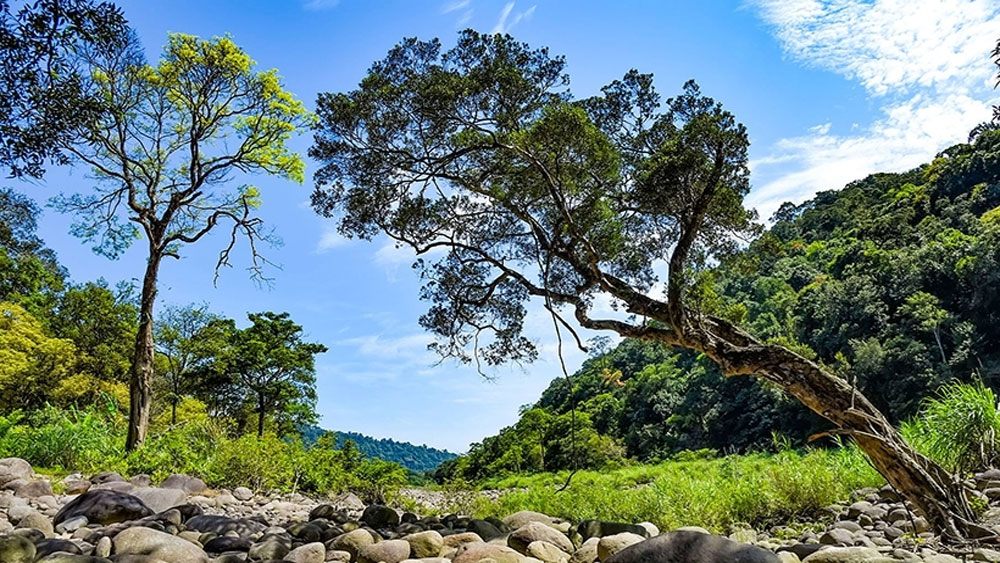 Vu Quang National Park, ASEAN, Heritage Park certificate, Ha Tinh province, Truong Son Range, average height, rare and precious mammals, natural forest