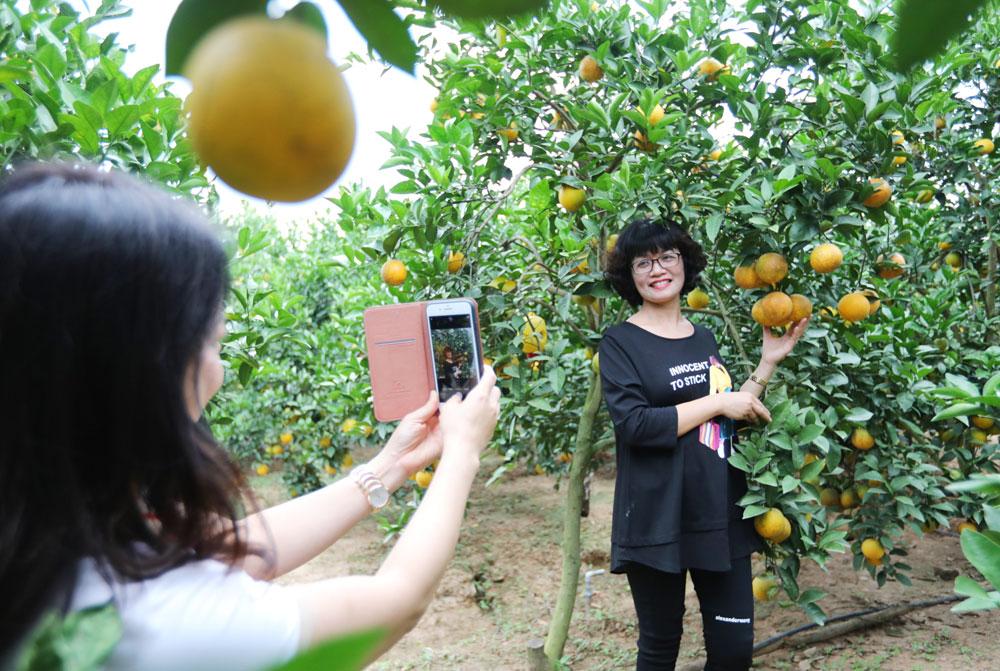 Du khách trải nghiệm vùng cây ăn quả Lục Ngạn. Ảnh: Danh Lam