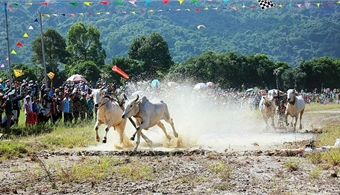 Ox race show draws large crowds in Mekong Delta