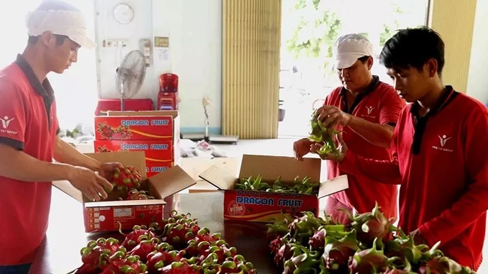 Vietnamese enterprises contribute to Vietnam - Australia trade