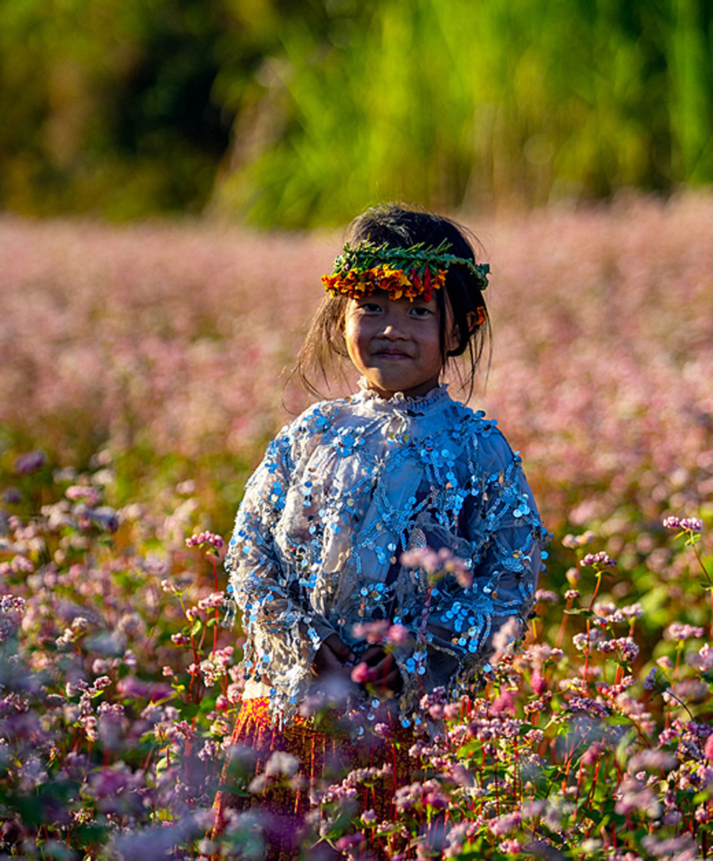 Come December, blooming flower season, Ha Giang province, yellow cabbage, peach blossoms, buckwheat flowers,