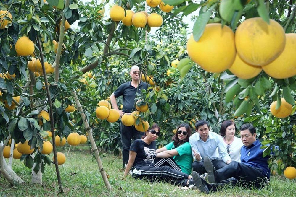Du khách tham quan vùng cây ăn trái Lục Ngạn.