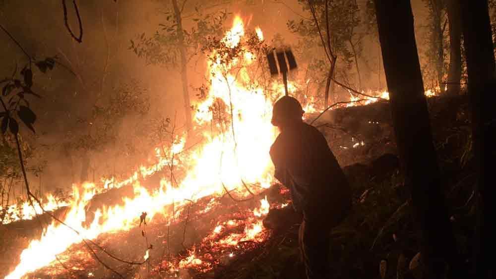 Clip: Cháy rừng tại huyện Yên Dũng (Bắc Giang)