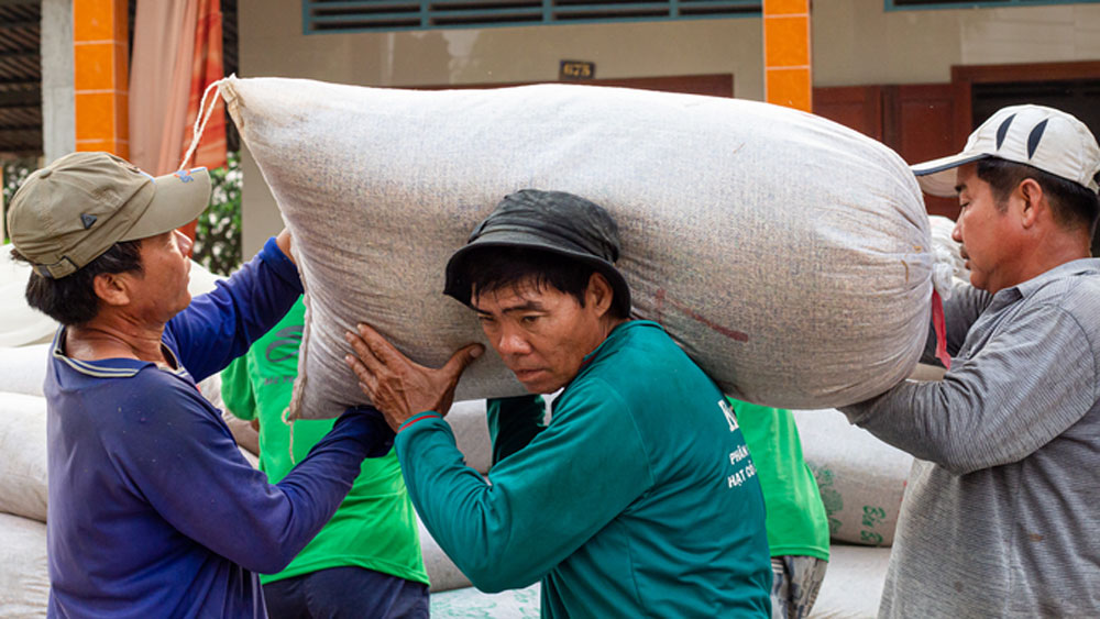 Shipping container, Vietnam rice, 9-year peak, Rice export prices