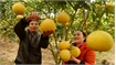 Bac Giang grapefruits exported to Russia