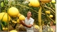 Bac Giang harvests nearly 40,000 tonnes of orange, pomelo