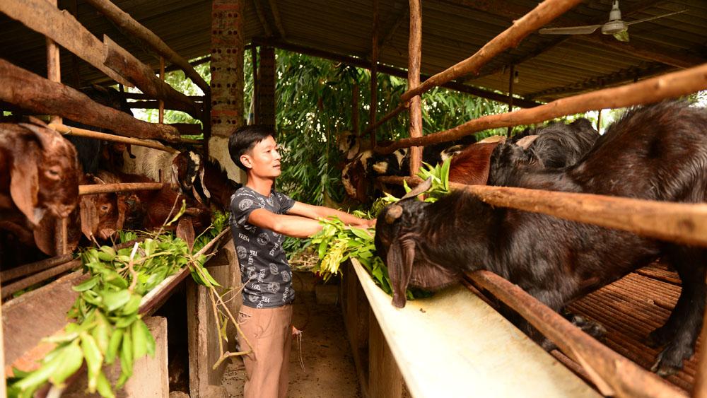 Thống kê hộ nghèo, an sinh xã hội, xã đặc biệt khó khăn, huyện nghèo, khơi dậy, ý chí vươn lên thoát nghèo, Bắc Giang