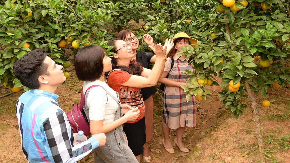 Lục Ngạn - vùng cây ăn quả trọng điểm quốc gia