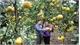 Luc Ngan strives to become national key fruit growing area