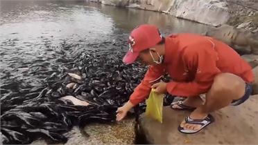 Hàng nghìn con cá trê ngoi lên mặt hồ Núi Sập