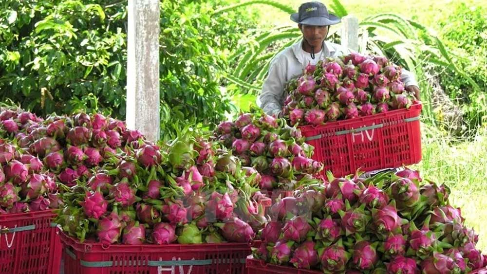 Fruit and vegetable exports hit over US$3.2 billion in 2020