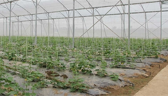 Bac Giang supports linkages between production and consumption of farm produce
