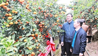 Bac Giang's agriculture sees spectacular growth