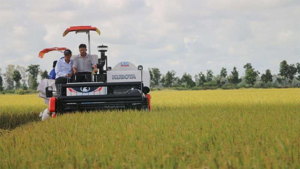 First batch of Vietnamese rice, UK , under UKVFTA