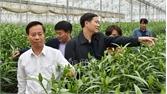 Tân Yên: Ứng dụng công nghệ cao vào sản xuất, mỗi năm thu lãi gần 1 tỷ đồng/ha