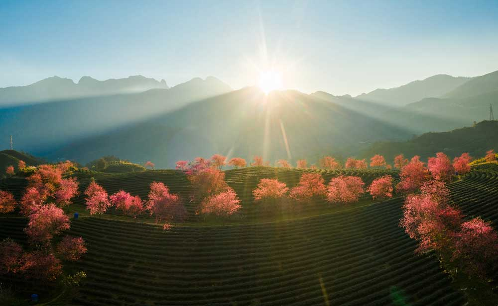 Bac Giang , photographers, spring moments
