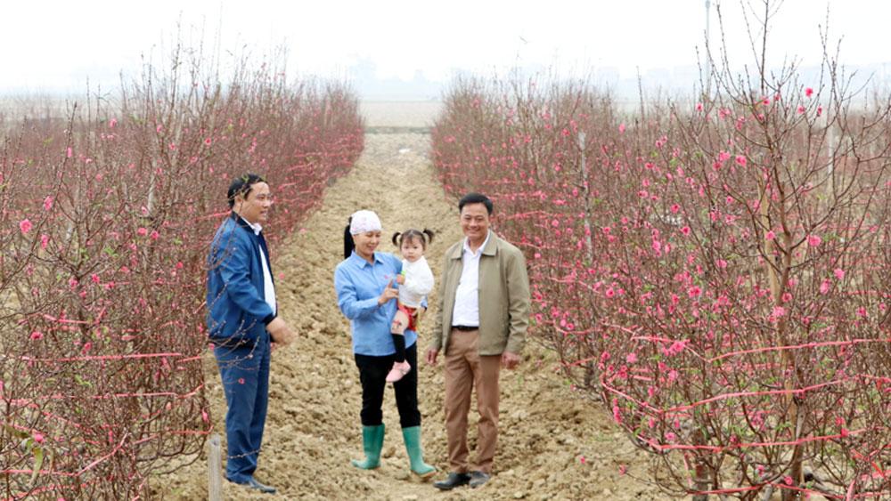 Hiệp Hòa: Sắc xuân trên vườn đào Xuân Cẩm