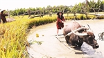 Travel on buffalo back