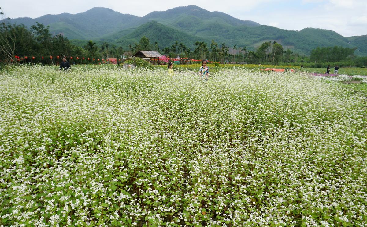 Vườn sinh thái, hoa hướng dương, tam giác mạch, sao nhái