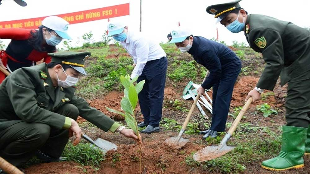 Provinces, launch tree planting festivals, one billion tree programme