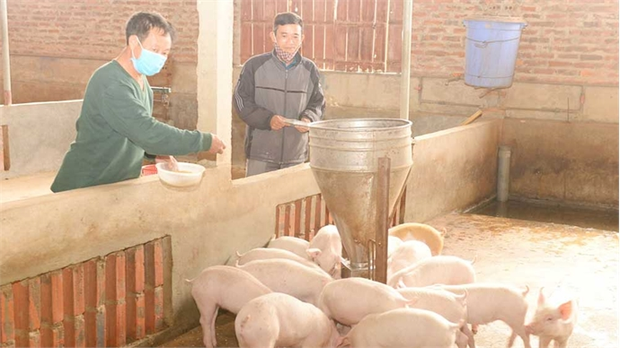 Bac Giang focuses on developing livestock breeding after Tet