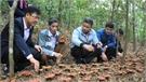 Sản xuất nấm lim xanh tại Sơn Động: Khai thác lợi thế từ rừng