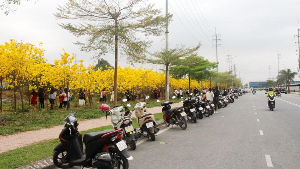 Bắc Giang, Việt Yên, hoa phong linh, phòng dịch, Covid-19