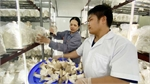 Bac Giang increases competitiveness of mushroom products