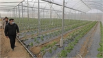 High-tech farming needs investment and proper policies