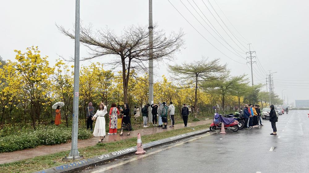Bắc Giang, Hoa phong linh, khu công nghiệp Vân Trung, Chụp ảnh với hoa phong linh, Khu công nghiệp Vân Trung