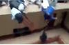 Gãy lan can trường học, 7 sinh viên tử vong