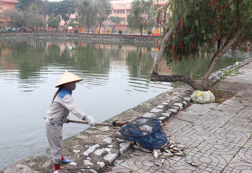 TP Bắc Giang, ô nhiễm nước, hồ Tư Thục, cá chết hàng loạt.