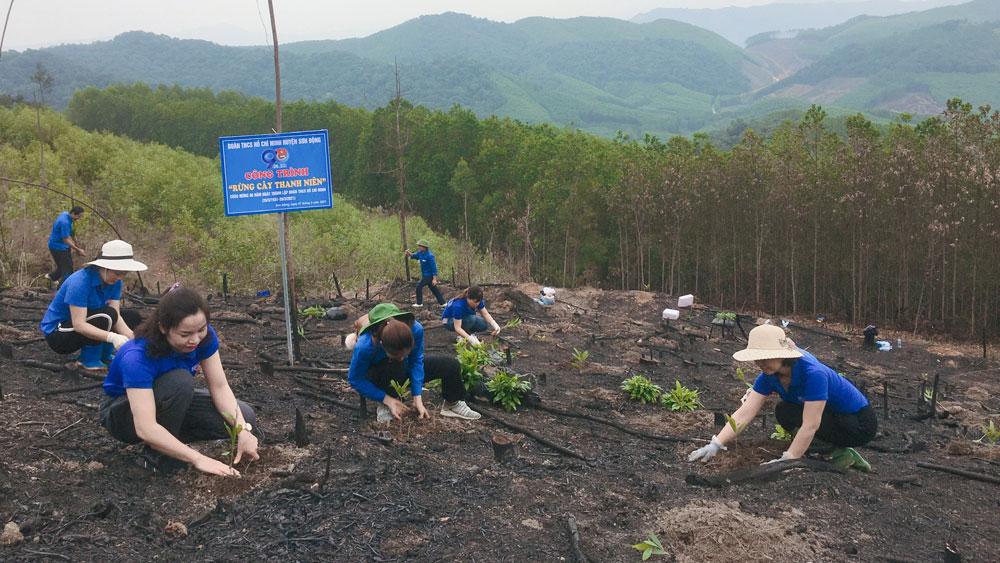 Sơn Động; Bắc Giang; trồng rừng