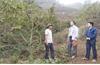 Chuyển đổi cơ cấu cây trồng, vật nuôi, giải pháp giảm nghèo vùng DTTS