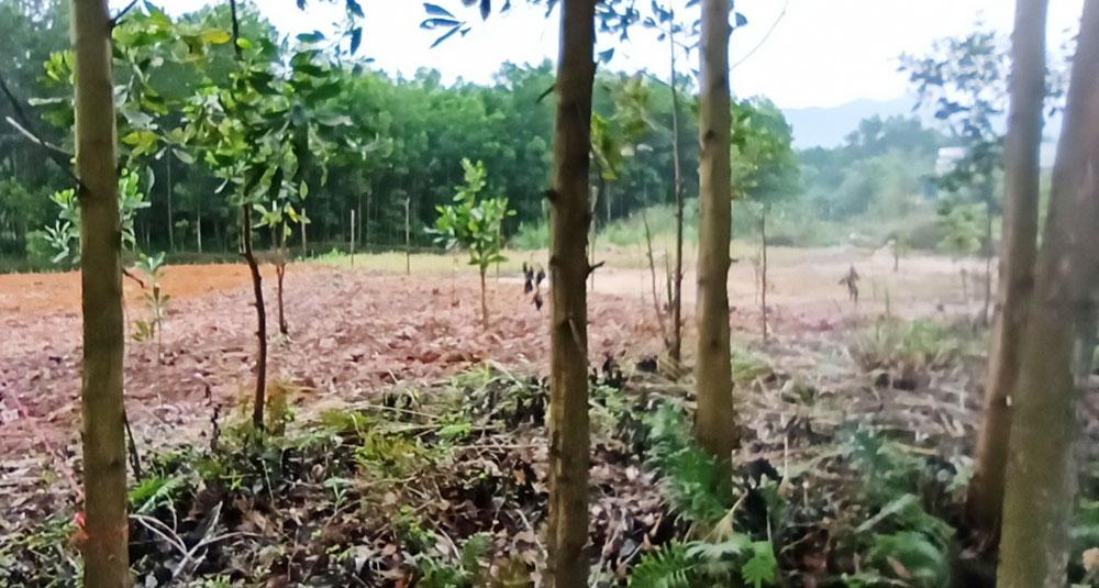 Sơn Động, Bắc Giang, vi phạm đất đai, khoáng sản