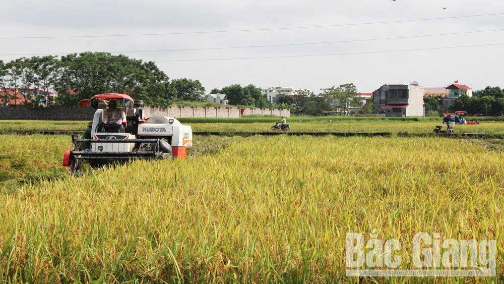 Bac Giang makes production plan to ensure food security